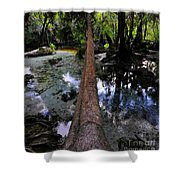 Palm Over Spring Shower Curtain