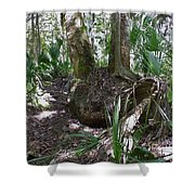 Palm Roots Shower Curtain