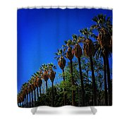 Palm Row Shower Curtain