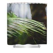 Palm Tree 5 Shower Curtain
