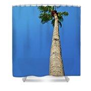 Palm Tree Against Blue Sky Shower Curtain