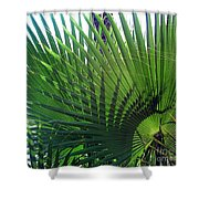 Palm Tree, Big Leafs Shower Curtain