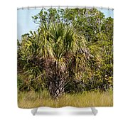 Palm Tree In Golden Grass Shower Curtain