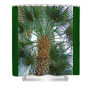 Palm Tree Shower Curtain