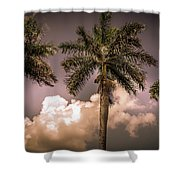 Palm Trees Against Beautiful Sky Shower Curtain