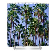 Palm Trees. California, Sunny Beauty Shower Curtain