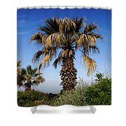 Palm Trees Growing Along The Beach Shower Curtain