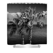 Palm Trees In Black And White At Laguna Beach Shower Curtain