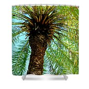 Palm Upview Shower Curtain