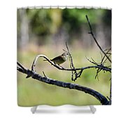 Palm Warbler Greetings Shower Curtain