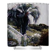 Palmetto Beach Shower Curtain