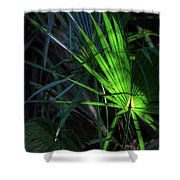 Palmetto In Light Shower Curtain