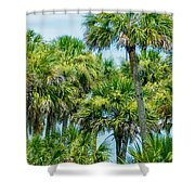Palmetto Palm Trees In Sub Tropical Climate Of Usa Shower Curtain