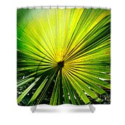 Radial Palm Shower Curtain