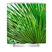 Palms 2 Shower Curtain