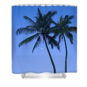 Palms And Blue Sky Shower Curtain