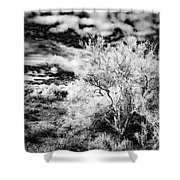 Palo Verde Morning Shower Curtain