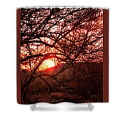 Palo Verde Sunset Shower Curtain