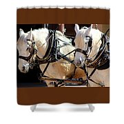 Palomino Horses Shower Curtain