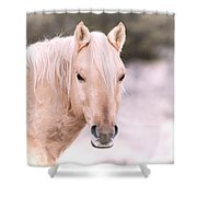 Palomino In The Snow Shower Curtain