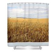 Palouse Wheat Fields Shower Curtain