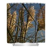 Pampas Grass At Sunset Shower Curtain