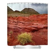 Pampas Grass In The Desert Torotoro National Park Bolivia Shower Curtain