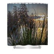 Pampas Grass Sunset Shower Curtain