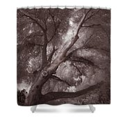 Pams Tree  Two B And W Shower Curtain