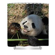 Panda Bear Laying On His Back And Eating Bamboo Shower Curtain