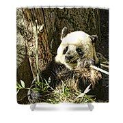 Panda Breakfast Shower Curtain