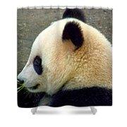 Panda Snack Shower Curtain