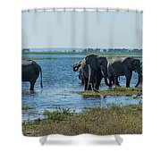 Panorama Of Elephant Herd Drinking From River Shower Curtain