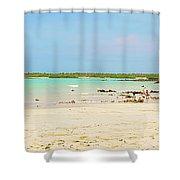Panorama Of The El Garrapatero Beach On Santa Cruz Island In Gal Shower Curtain