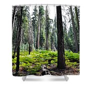 Panoramic Forest Shower Curtain
