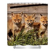 Panoramic Fox Kits Shower Curtain