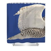 Panoramic Prairie Snowy Owl  Shower Curtain