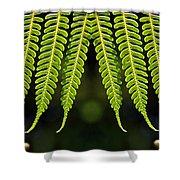 Panoramic Veil Of Ferns Shower Curtain