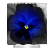 Pansey In Blue Shower Curtain