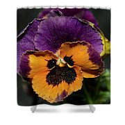 Pansie Shower Curtain