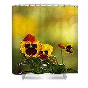 Pansies In The Autumn Glow Shower Curtain