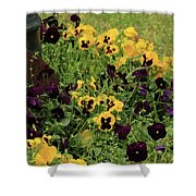 Pansies Shower Curtain