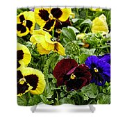Pansies Of A Different Color Shower Curtain