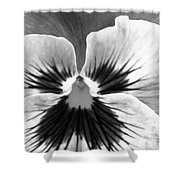 Pansy 06 Bw - Thoughts Of You Shower Curtain