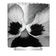 Pansy 10 Bw - Thoughts Of You Shower Curtain