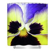 Pansy 10 - Thoughts Of You Shower Curtain
