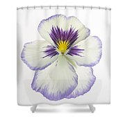 Pansy 2 Shower Curtain