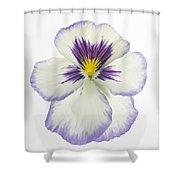 Pansy 2 Shower Curtain by Tony Cordoza