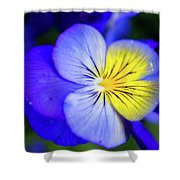 Pansy Close-up Square Shower Curtain