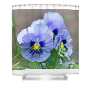 Pansy Flowers Shower Curtain